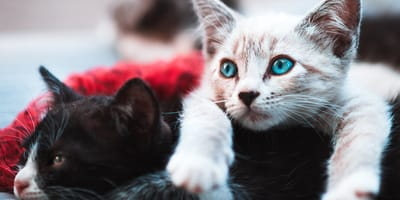 Take the test: Which cat breed is perfect for you?