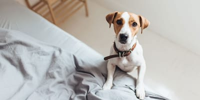 How long will your dog stay alone in the day?