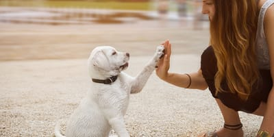 How much experience do you have with dogs?